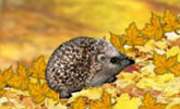 Awesome Hedgehog